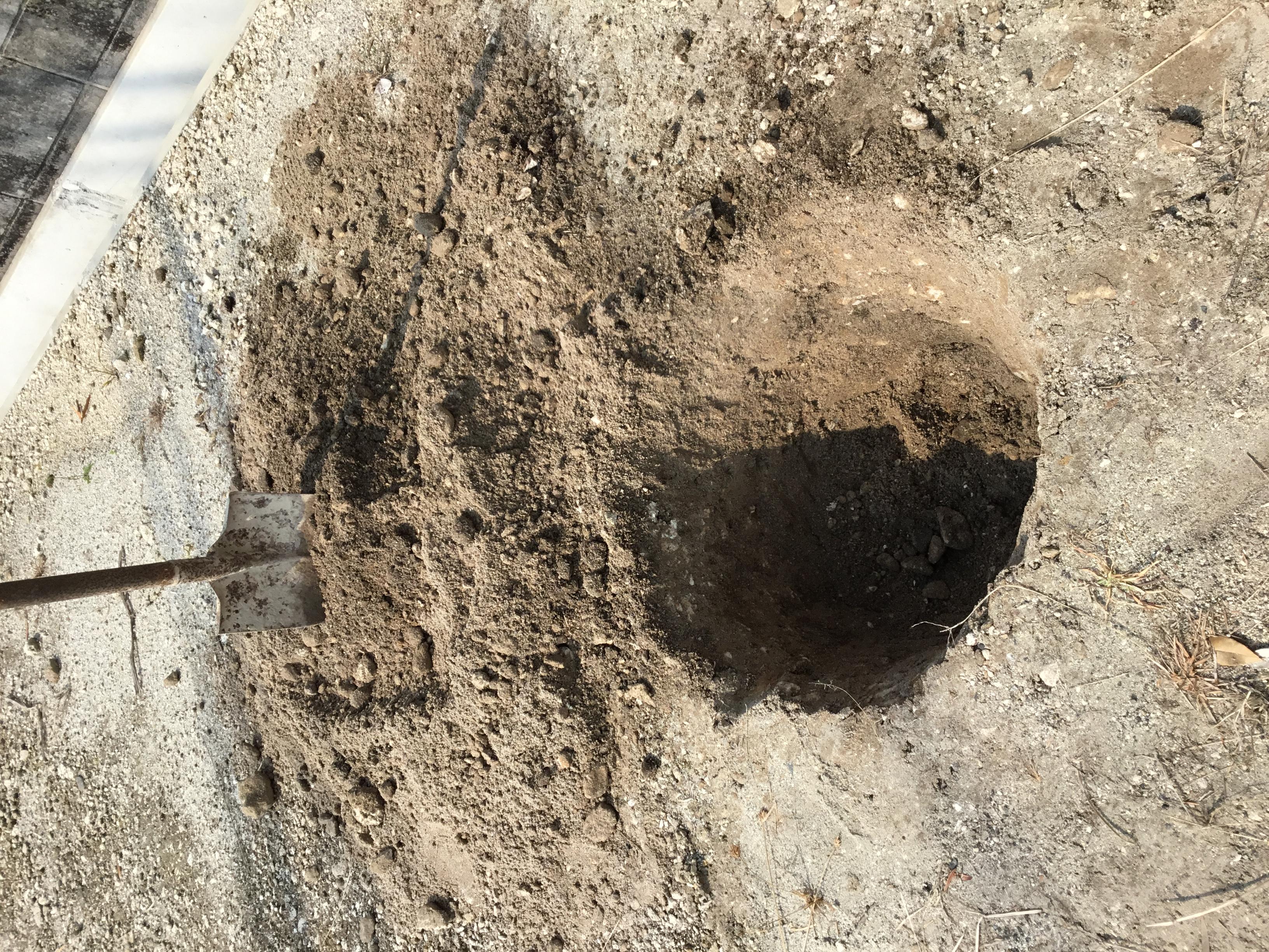 直径50cm、深さ50cmの穴ができました。ここに植樹します。