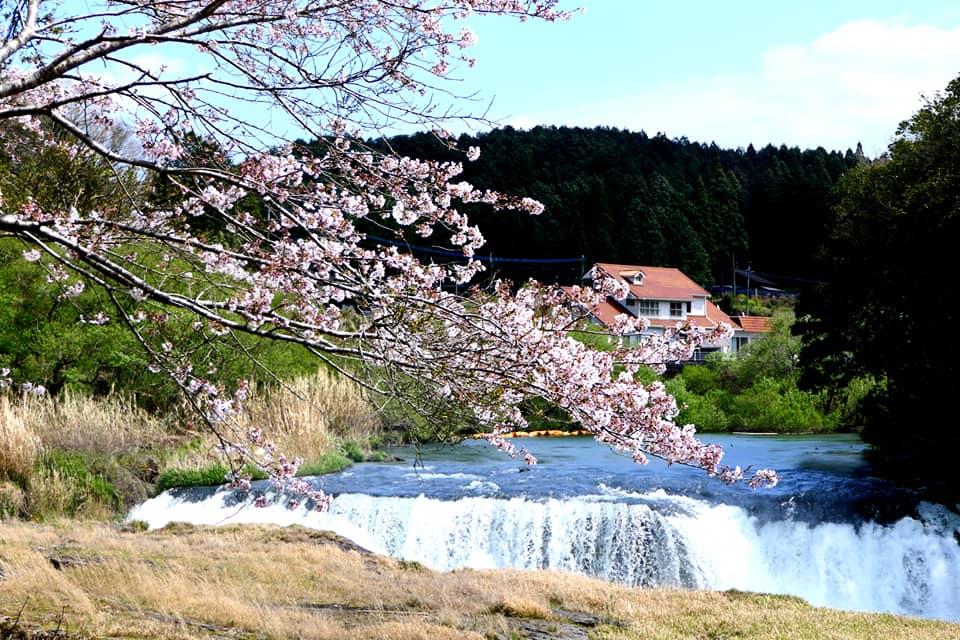 滝と桜のコントラストが見事ですね。