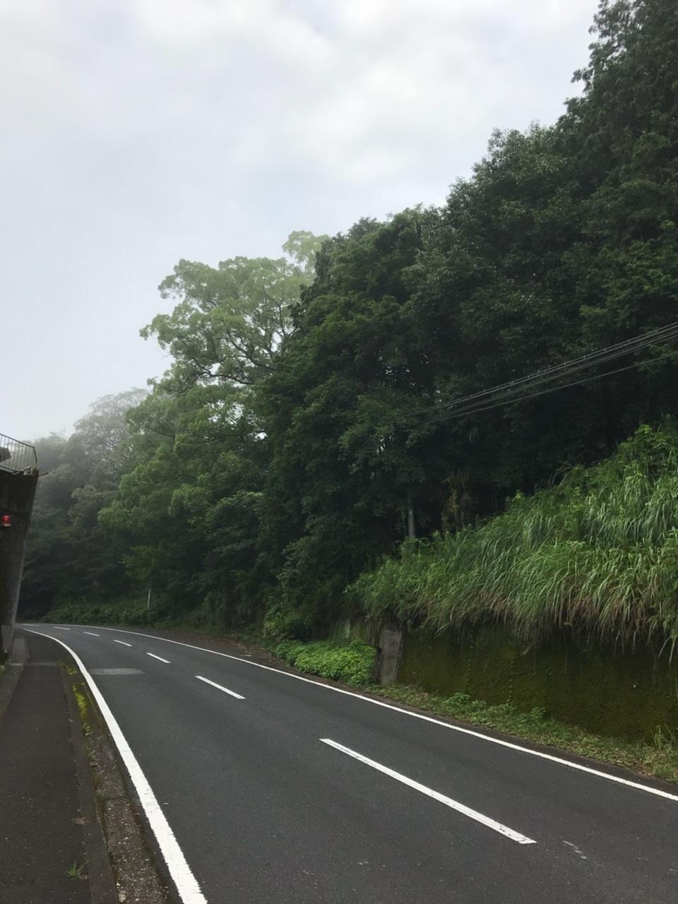 城山への道です。